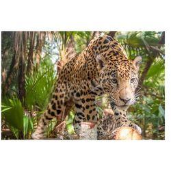 Fototapeta Jaguar w dżungli