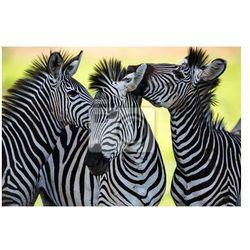 Fototapeta Zebry całuje i kuląc