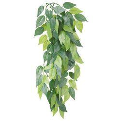 Roślina do terrarium Rozmiar:o 20 × 30 cm