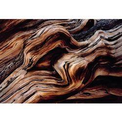 Fototapeta KOMAR 8-520 Old Giant National Geographic