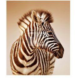 Fototapeta Portret Zebra