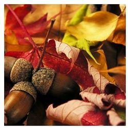 Jesiennie - Żołędzie wśród Liści - reprodukcja