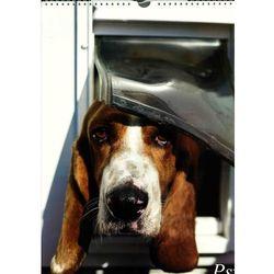 Kalendarz 2016 Planszowy 13 kart. Psy + zakładka do książki GRATIS