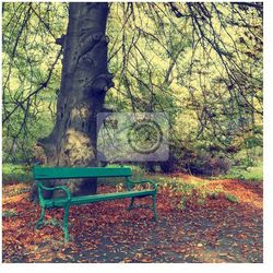 Fototapeta ławka w parku jesienią, zabytkowe wygląd