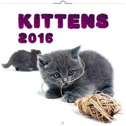 2016 Kalendarz ścienny Koty