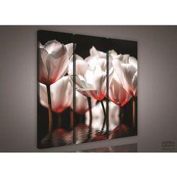 Obraz Białe tulipany PS974S6