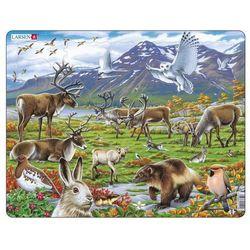 Zwierzęta śródlądowe Arktyki
